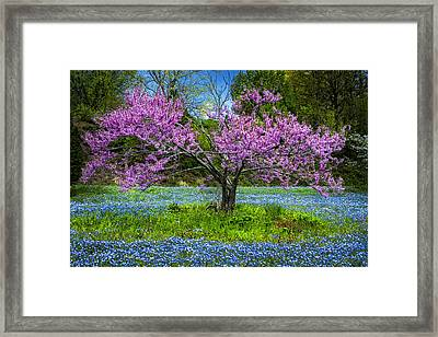Pink Framed Print by Debra and Dave Vanderlaan