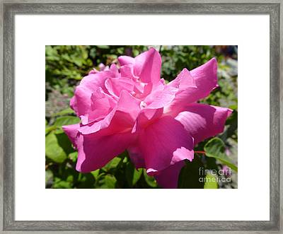 Pink Delight Framed Print by Anat Gerards