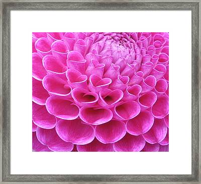Pink Delight Framed Print by Brian Chase