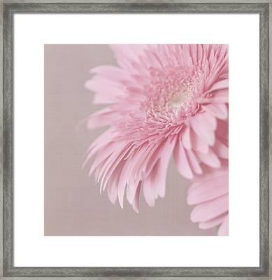 Pink Delight Framed Print by Kim Hojnacki