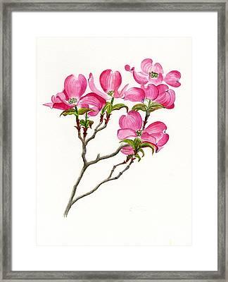 Pink Dogwood Array Framed Print by Sharon Freeman