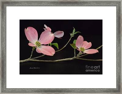Framed Print featuring the photograph Pink Dogwood Branch  by Jeannie Rhode