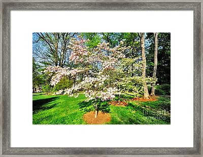 Pink Dogwood Framed Print by Donald Groves