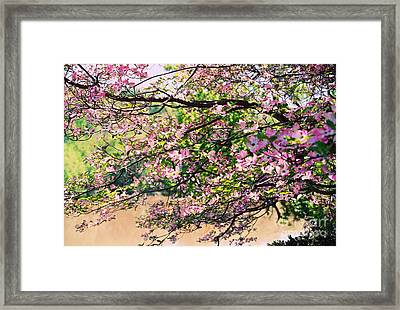 Pink Dogwood I Framed Print
