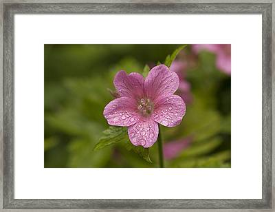 Pink Droplets Framed Print