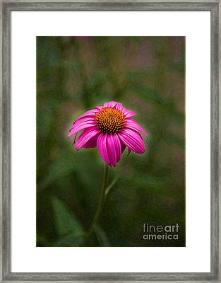 Pink Echinacea Digital Flower Photo.painting Composite Artwork By Omaste Witkowski Framed Print by Omaste Witkowski