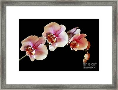 Pink Exotique Framed Print by Inspired Nature Photography Fine Art Photography
