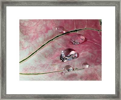 Pink Fancy Leaf Caladium - September Tears Framed Print