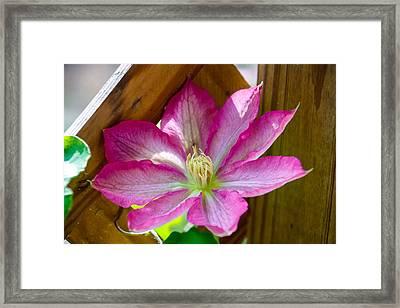 Pink Fantasy Framed Print
