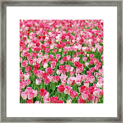 Framed Print featuring the photograph Pink Field by Kjirsten Collier