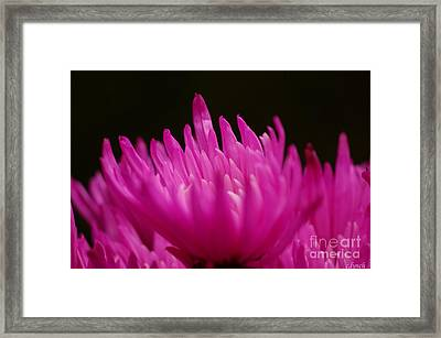Pink Fire 3 Framed Print by Carol Lynch