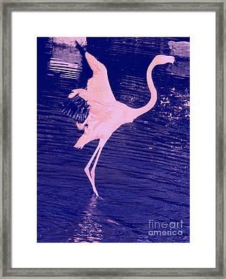 Pink Flamingo Framed Print by Avis  Noelle