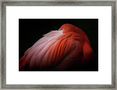 Pink Flamingo Framed Print by Billy Currie Photography