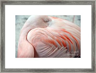 Framed Print featuring the photograph Pink Flamingo II by Robert Meanor
