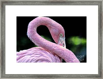 Pink Flamingo Framed Print