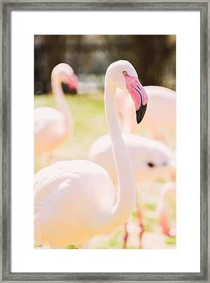 Pink Flamingo Portrait Framed Print