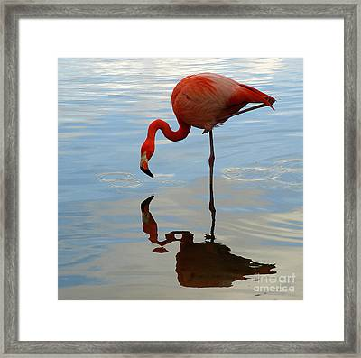 Pink Flamingo   Framed Print by Raymond Earley