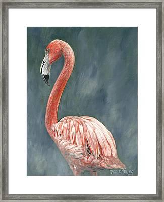Pink Flamingo Framed Print by Rob Dreyer