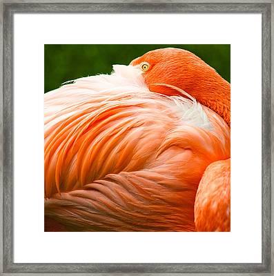 Pink Flamingo Framed Print by Viacheslav Savitskiy
