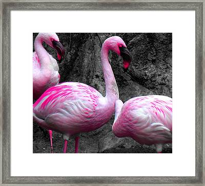 Framed Print featuring the photograph Pink Flamingos by J Anthony