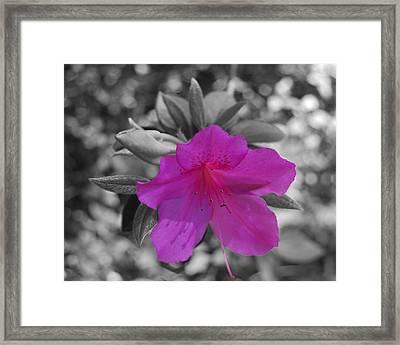 Pink Flower 2 Framed Print