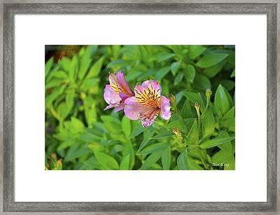 Pink Flower Framed Print by Alex King