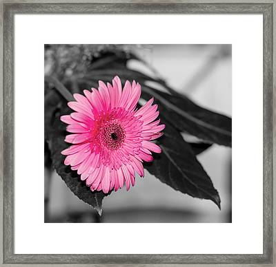 Pink Flower Framed Print by Amr Miqdadi