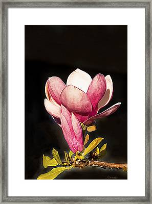 The Beginning And The End..... Framed Print by Renee Anderson