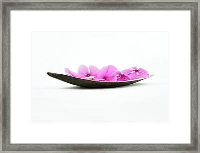 Pink Flower Boat Framed Print