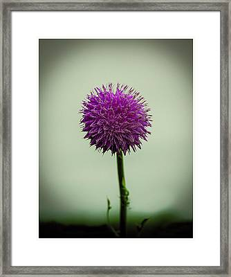 Pink Flower Framed Print by CSH Photography