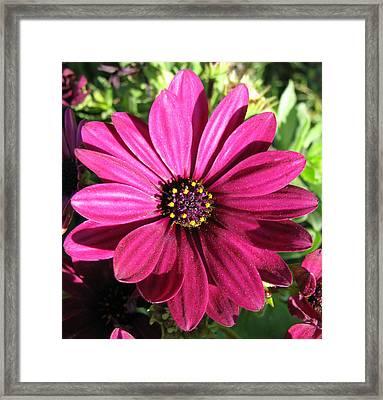 Pink Flower Framed Print by Eva Csilla Horvath