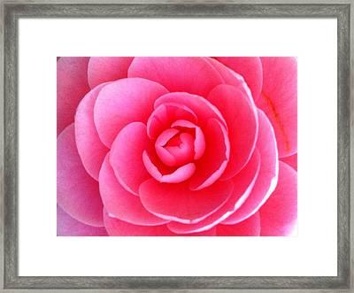 Pink Flower From Garden Framed Print by Beril Sirmacek