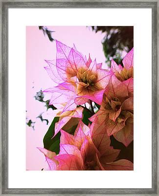 Pink Flower Framed Print by Girish J