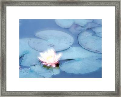 Pink Flower In Pond, Lotus Framed Print