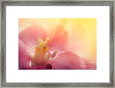 Pink Flower Macro Framed Print by Mythja  Photography