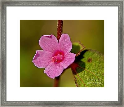 Framed Print featuring the photograph Pink Flower by Olga Hamilton