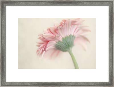 Pink Flower Photography - Pink Nursery Wall Art - Baby Girl Nursery Art - Pale Pink Mint Green Decor Framed Print by Amy Tyler