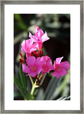 Framed Print featuring the photograph Pink Flower  by Ramabhadran Thirupattur