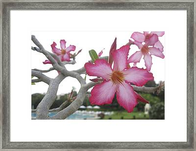 Pink Flower Framed Print by Russell Smidt