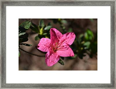 Framed Print featuring the photograph Pink Flower by Tara Potts