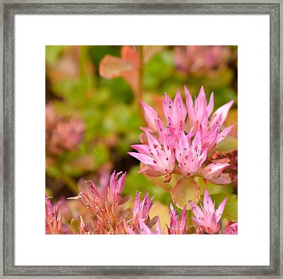 Pink Flower Framed Print by Tine Nordbred