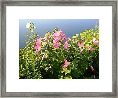 Pink Flowers By The Lake Framed Print by Good Taste Art