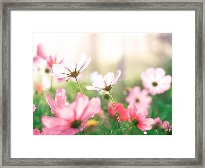 Pink Flowers In Meadow Framed Print