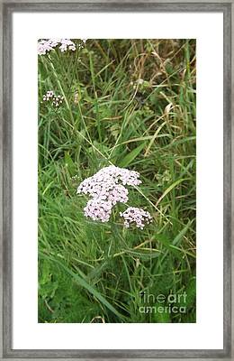 Pink Flowers Framed Print by John Williams