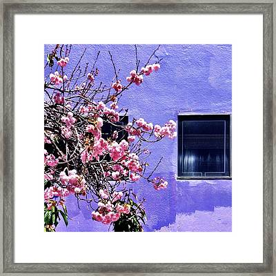 Pink Flowers Framed Print by Julie Gebhardt