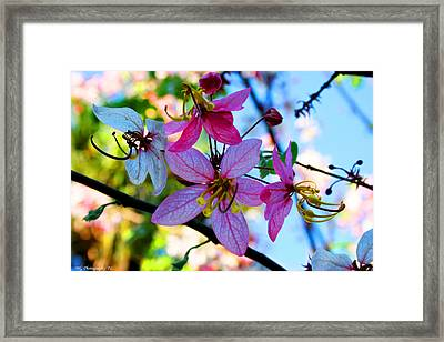 Pink Flowers Framed Print by Marty Gayler