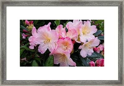Framed Print featuring the photograph Pink Flowers by Rose Wang