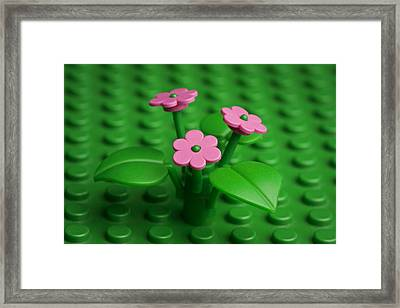 Pink Flowers Framed Print by Samuel Whitton
