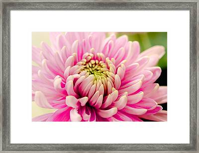 Pink Passion Framed Print by Dennis Baswell