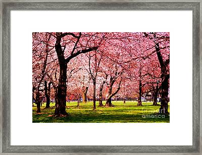 Pink Forest Framed Print by Patti Whitten
